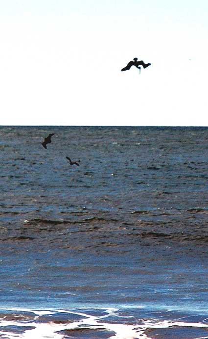 Birds, Playa del Rey, CA - January 19, 2006