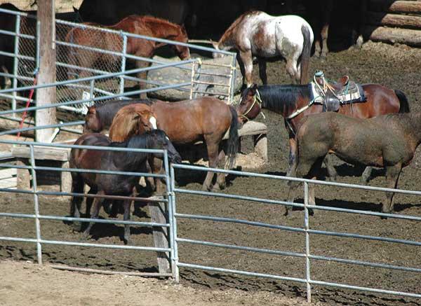 The horses of Beachwood Canyon, Hollywood