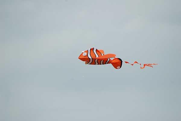 Cool kite -
