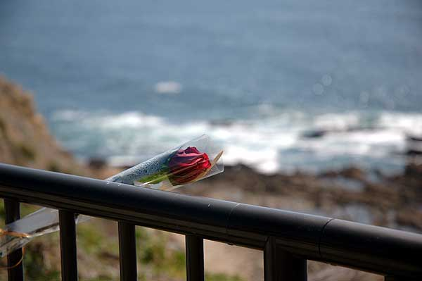A rose on the cliff railing...