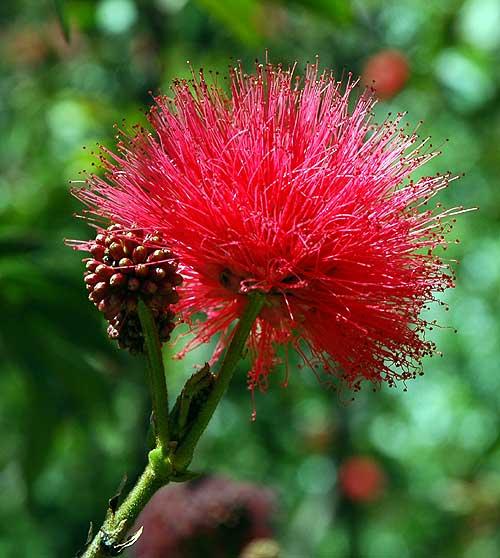Specimen - Mildred E. Mathias Botanical Garden