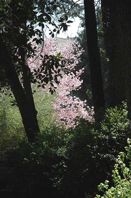 The Mildred E. Mathias Botanical Garden, UCLA