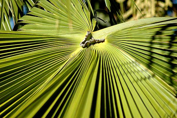 Palm Frond Geometry