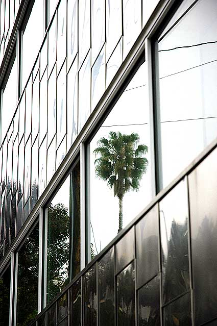 Palm reflected in window, Sunset Strip