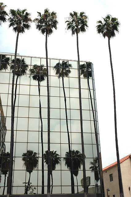 Palms, glass wall, Hollywood Boulevard