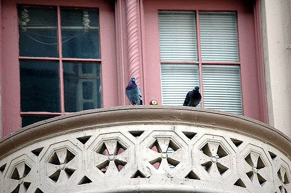 Two pigeons keeping an eye on Hollywood Boulevard