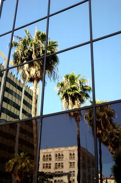 Palms on Hollywood Boulevard
