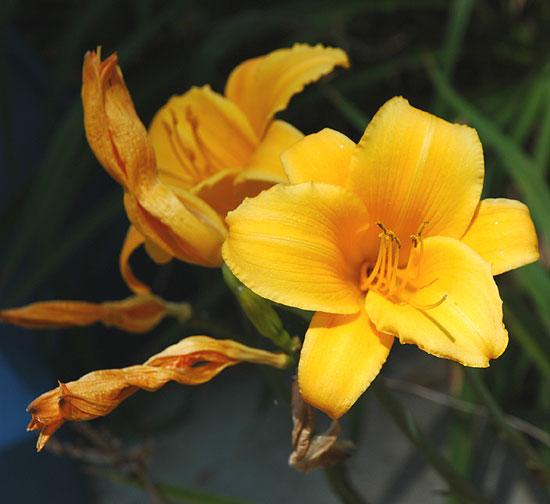 June Bloom, Los Angeles