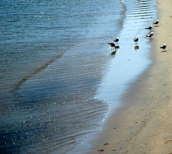 Shore Birds, Cabrillo Beach in San Pedro