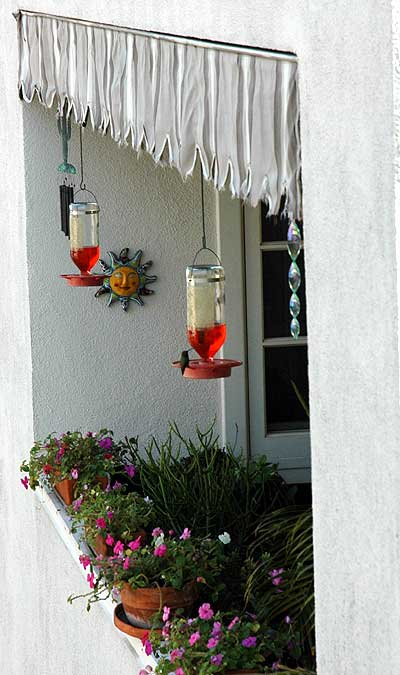 Hummingbird, Hollywood balcony, 15 December 2005
