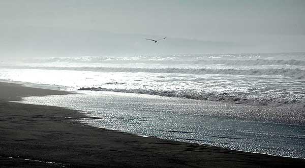 Manhattan Beach gull, 22 December 2005