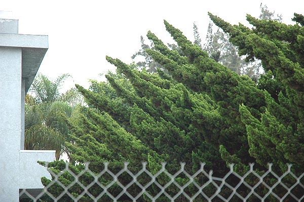 Westwood Cedars