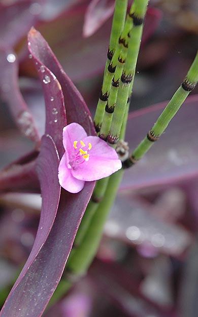 Purple Blooms in Westwood