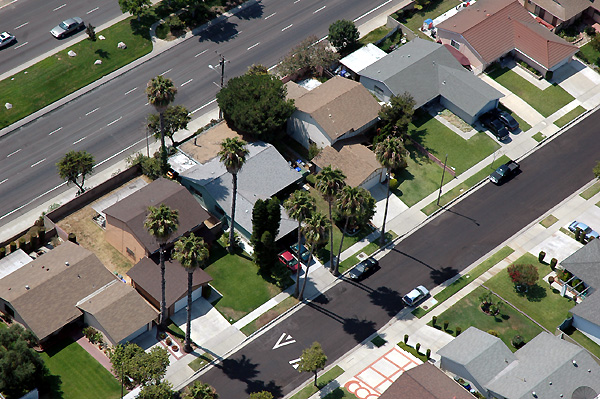 Palm trees seen from the Goodyear Blimp ...