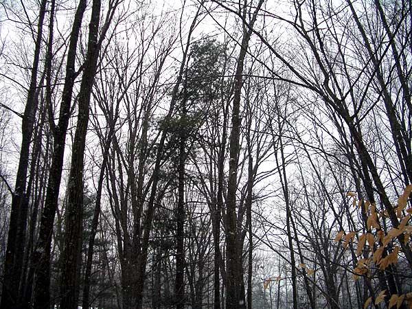 Ellenville, New York, December 31, 2005