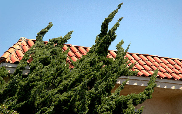 Tile roofs everywhere -